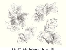 Abutilon clipart #19, Download drawings