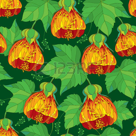 Abutilon clipart #10, Download drawings
