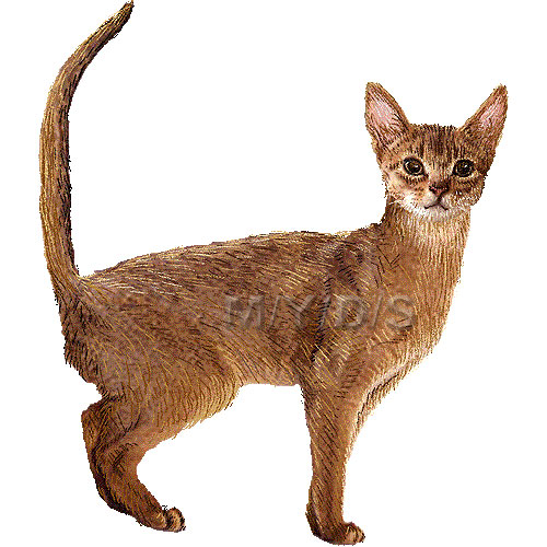 Abyssinian Cat clipart #20, Download drawings