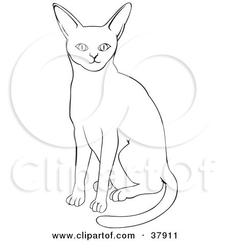 Abyssinian Cat clipart #10, Download drawings