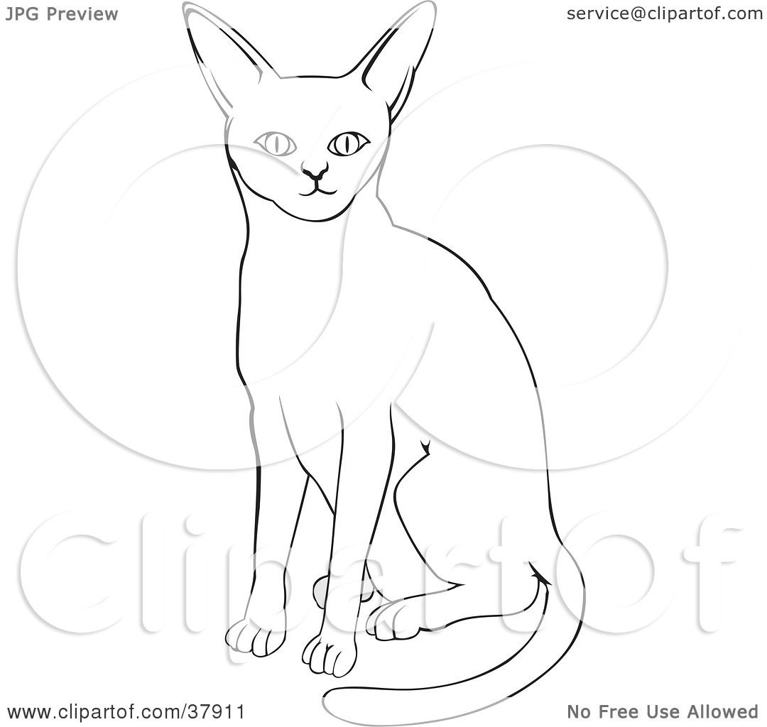 Abyssinian Cat clipart #18, Download drawings