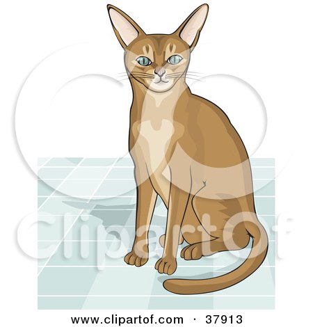 Abyssinian Cat clipart #4, Download drawings