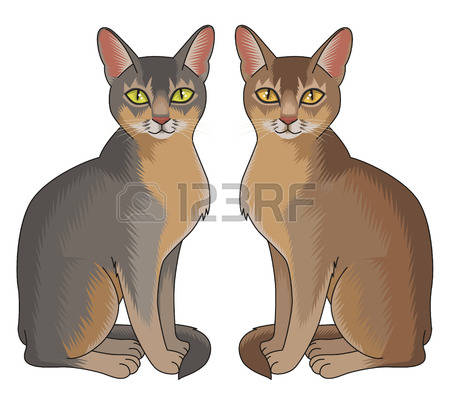 Abyssinian Cat clipart #7, Download drawings