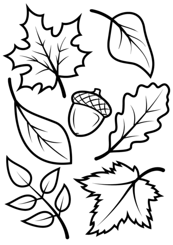 Acorn coloring #14, Download drawings