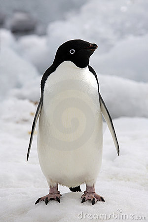 Adelie Penguin clipart #5, Download drawings