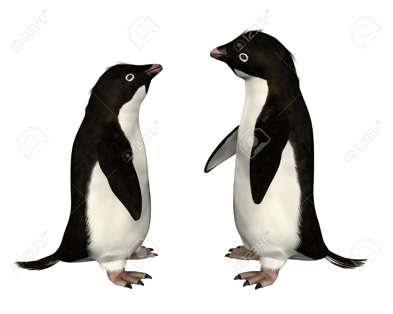 Adelie Penguin clipart #13, Download drawings
