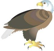 Adler clipart #9, Download drawings