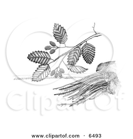 Adler clipart #18, Download drawings