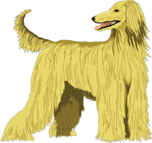 Afghan Hound clipart #1, Download drawings