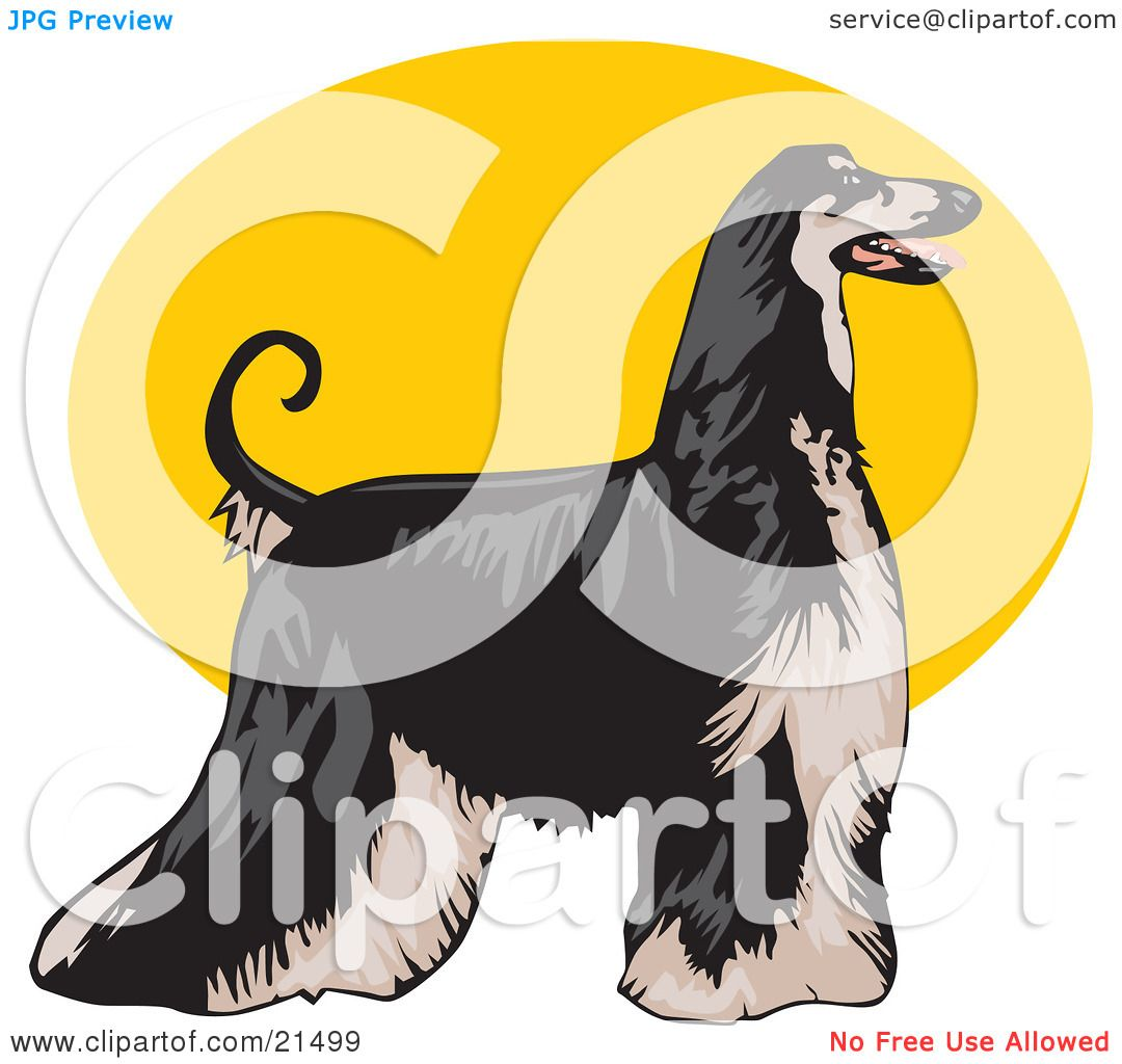 Afghan Hound clipart #13, Download drawings