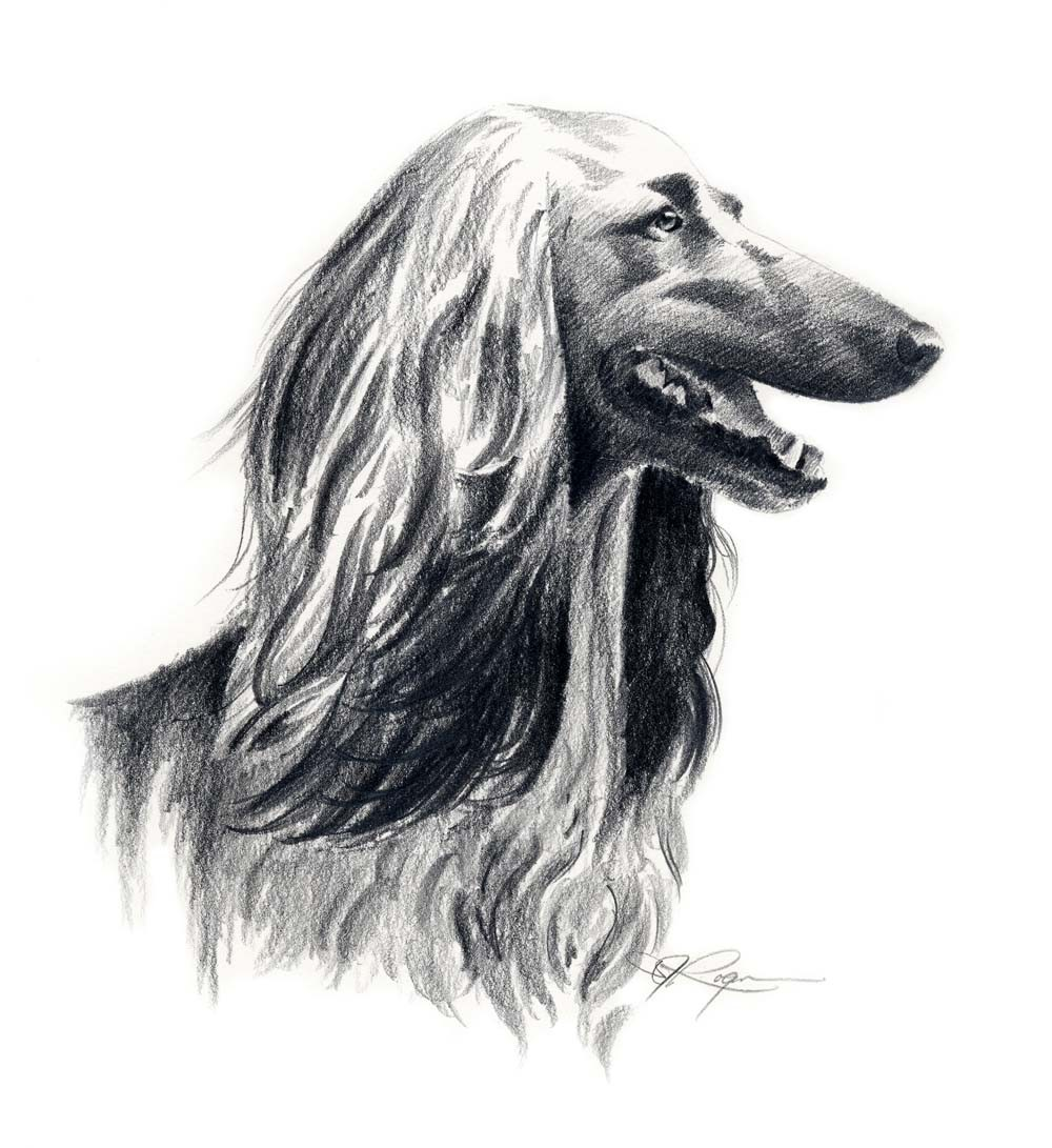 Afghan Hound clipart, Download Afghan Hound clipart for ...