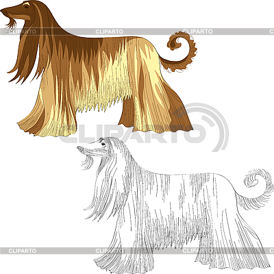 Afghan Hound clipart #20, Download drawings