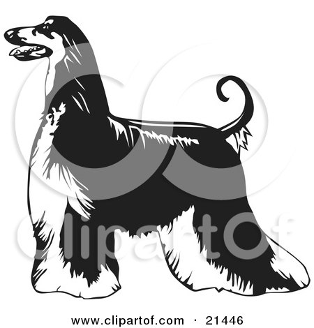 Afghan Hound clipart #3, Download drawings