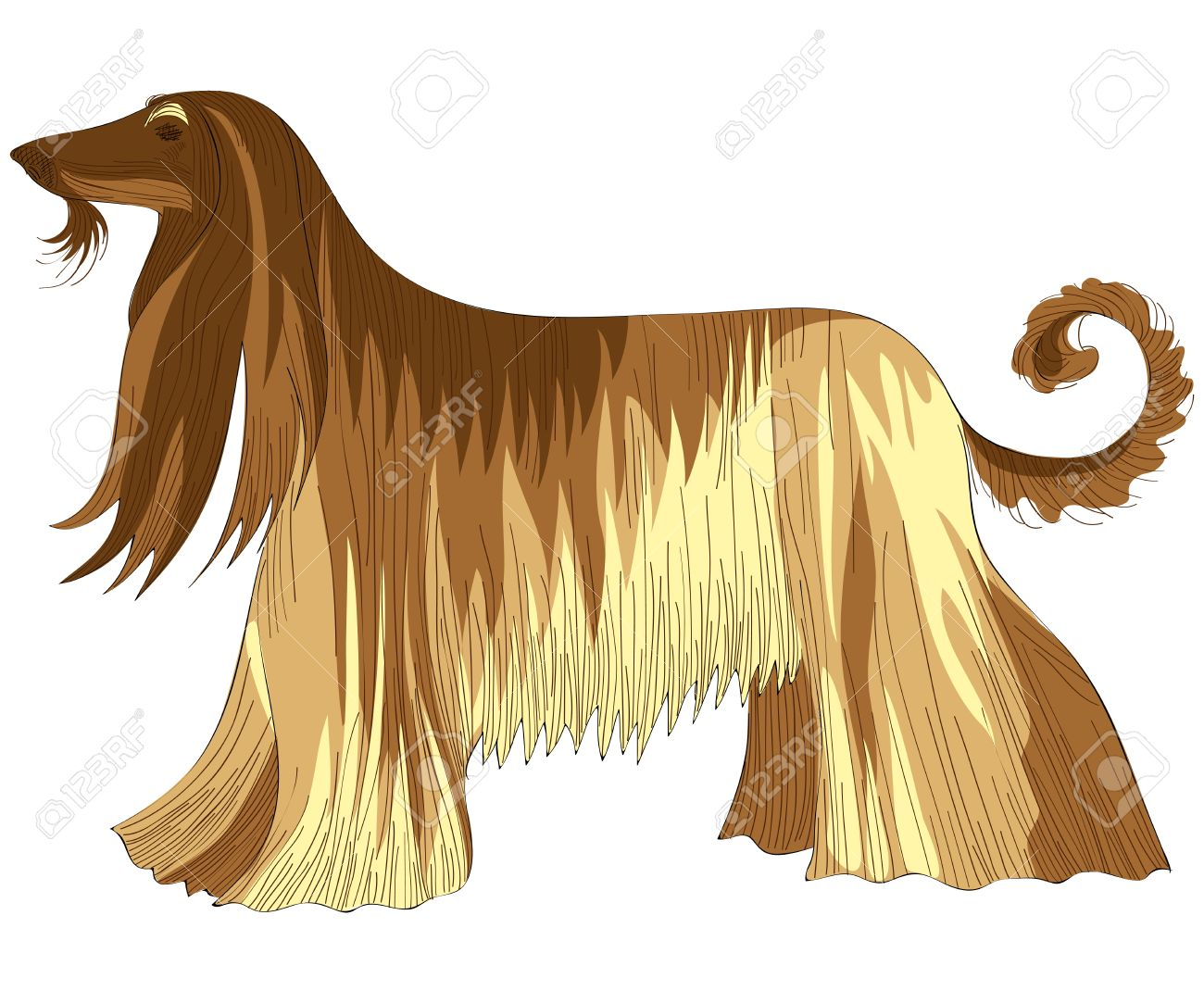 Afghan Hound clipart #16, Download drawings