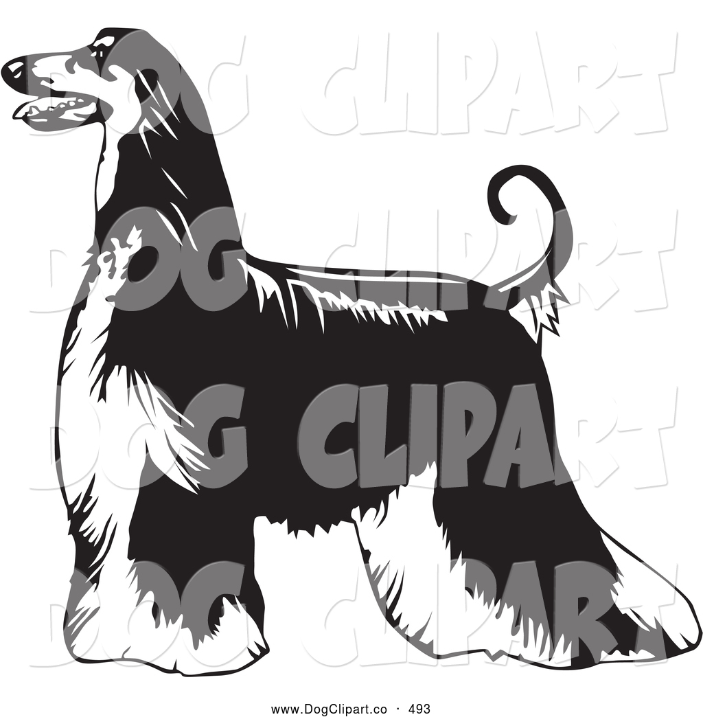 Afghan Hound clipart #9, Download drawings