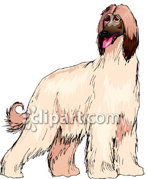 Afghan Hound clipart #4, Download drawings