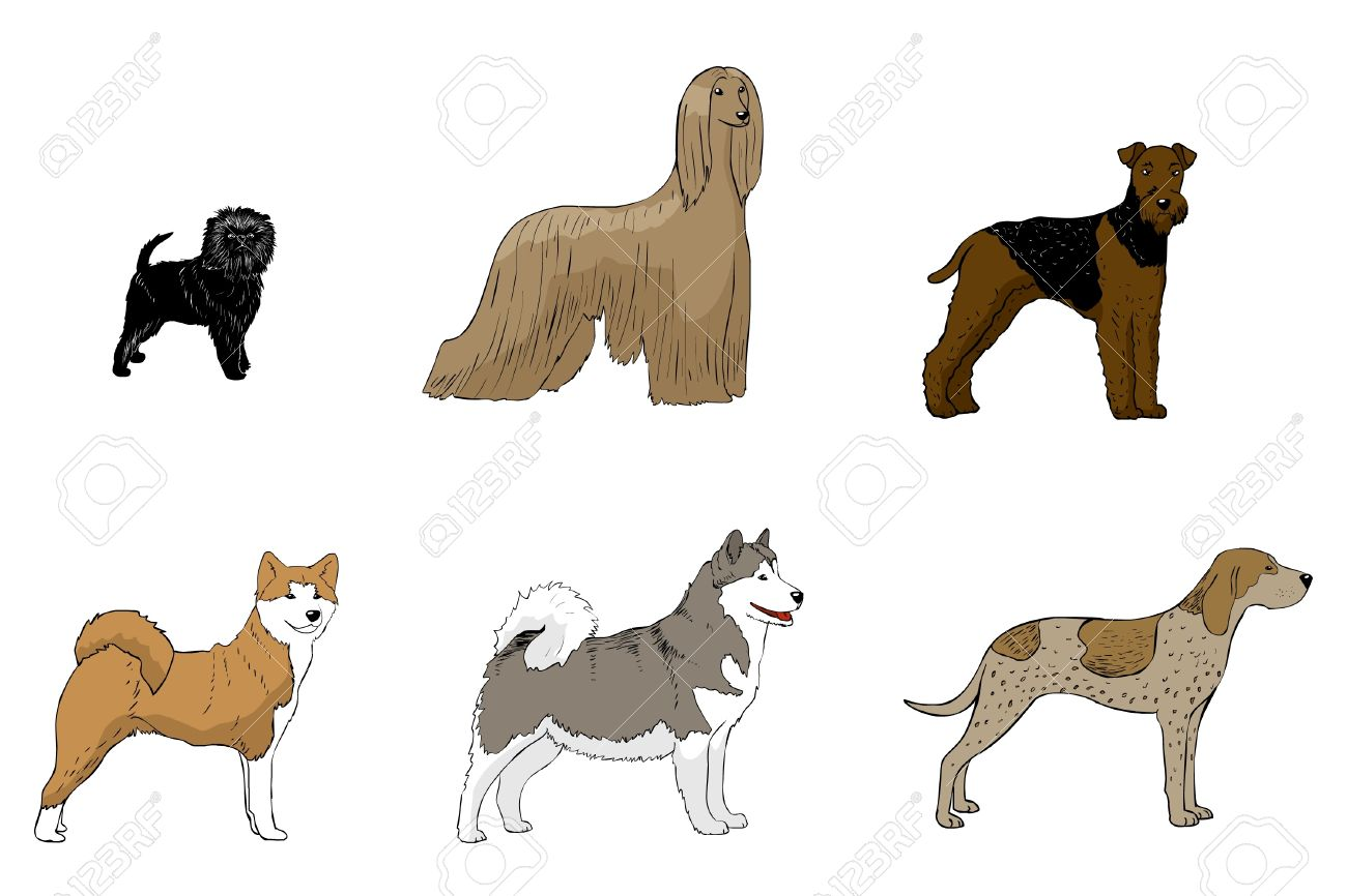 American Akita clipart #7, Download drawings