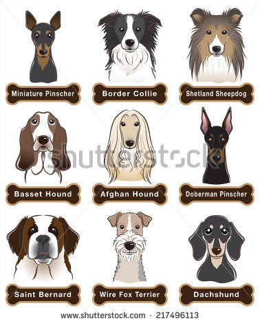 Afghan Hound svg #12, Download drawings