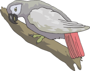 African Grey Parrot clipart #19, Download drawings