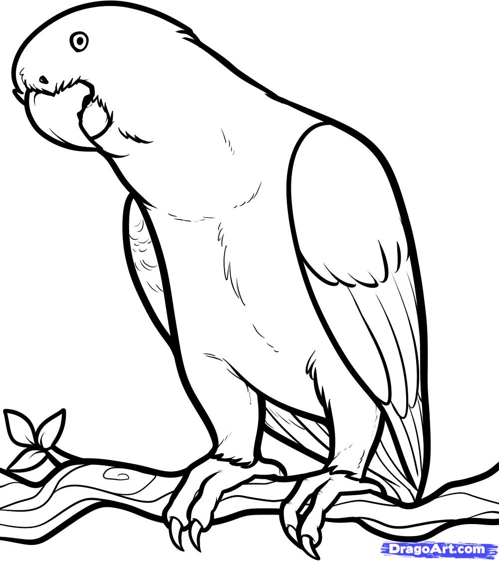 African Grey Parrot clipart #1, Download drawings