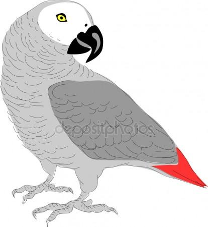 African Grey Parrot clipart #13, Download drawings
