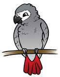 African Grey Parrot clipart #20, Download drawings