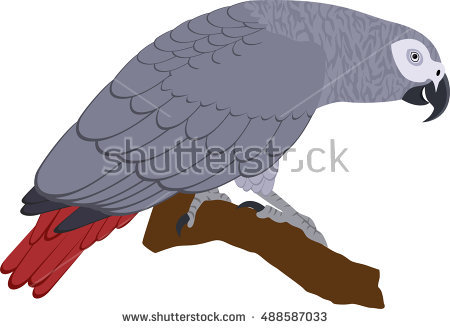 African Grey Parrot clipart #14, Download drawings
