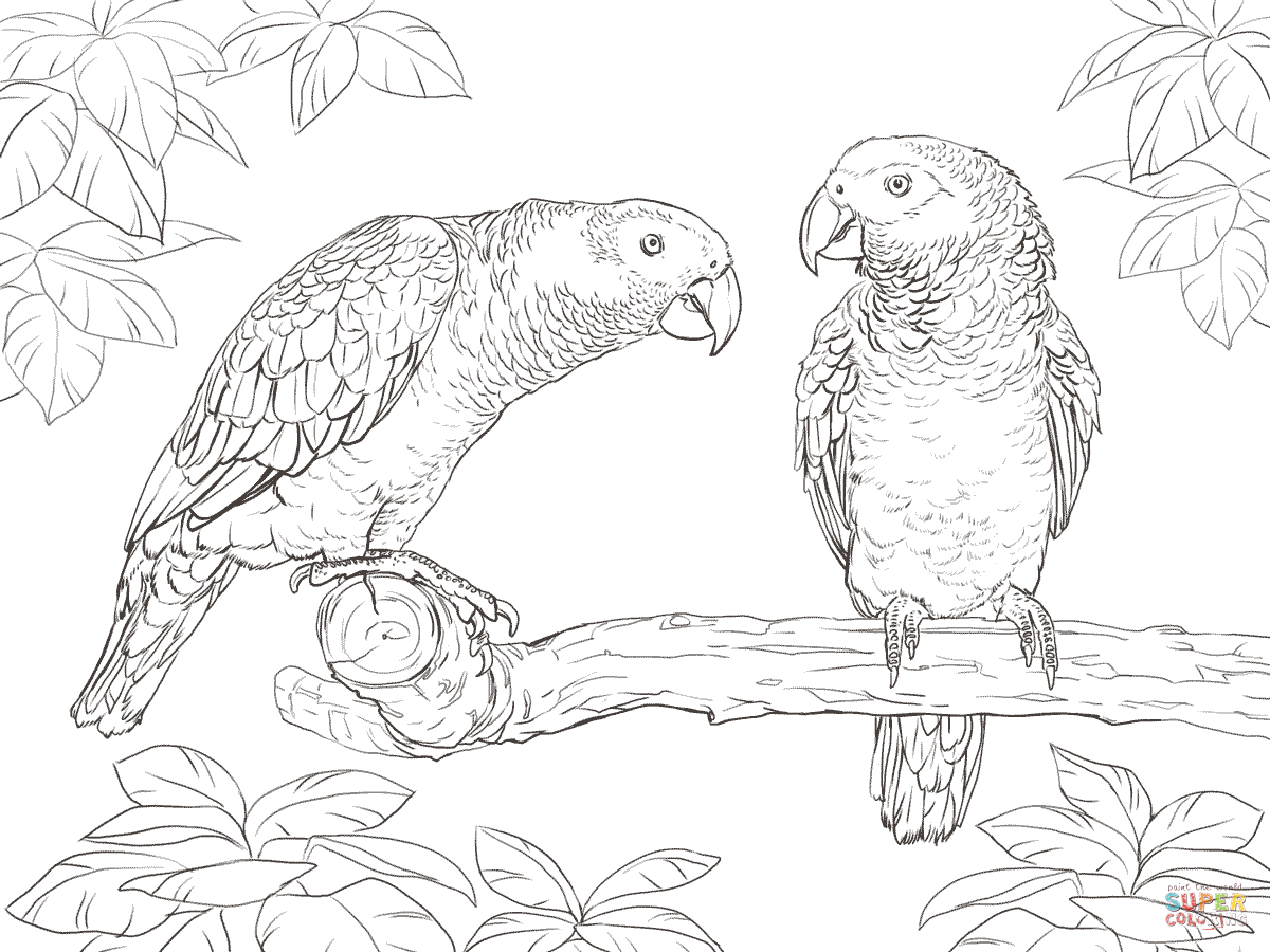 King Parrot coloring #17, Download drawings