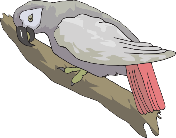 African Grey Parrot svg #20, Download drawings