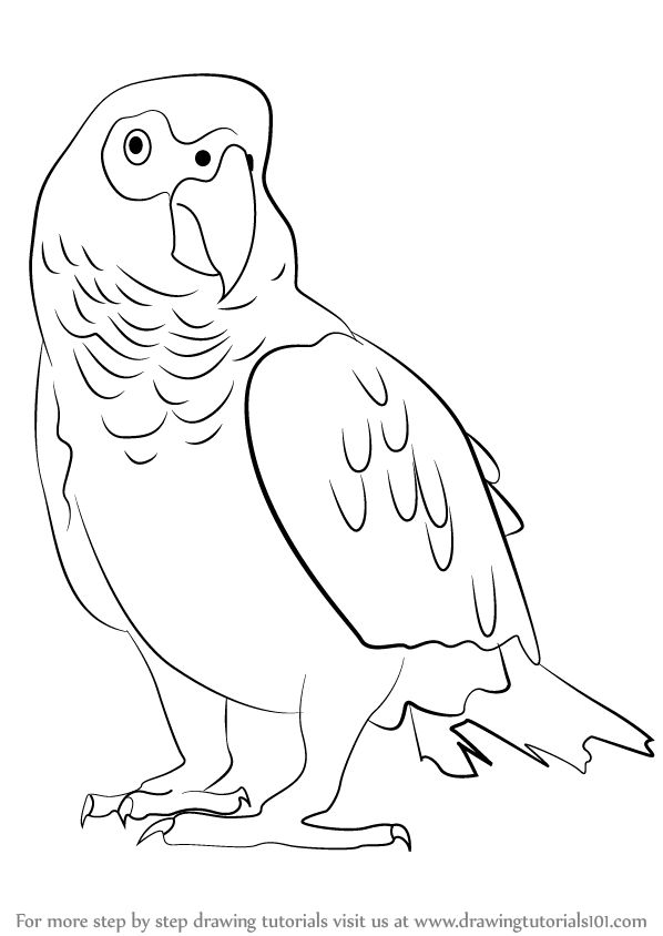 African Grey Parrot svg #10, Download drawings