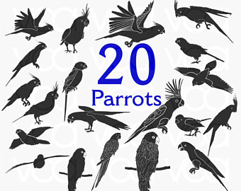 African Grey Parrot svg #13, Download drawings