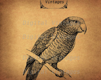 African Grey Parrot svg #11, Download drawings