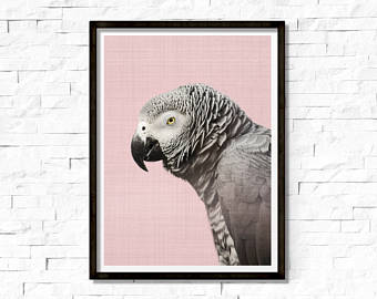 African Grey Parrot svg #9, Download drawings