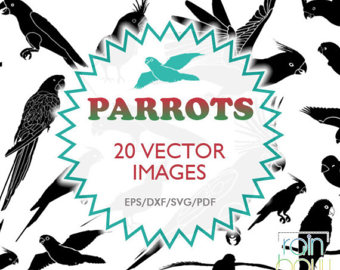 African Grey Parrot svg #16, Download drawings