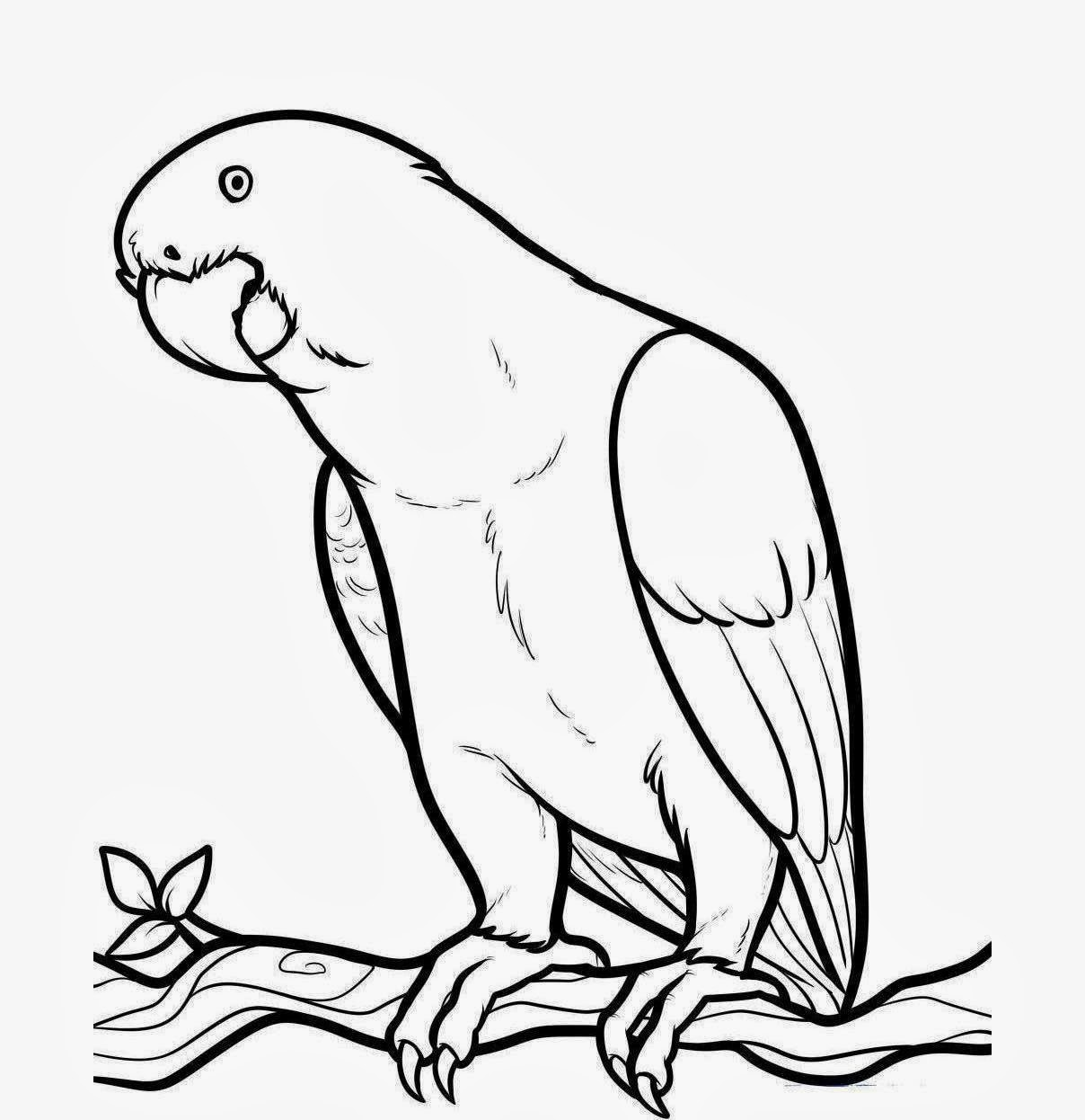 African Parrot clipart #1, Download drawings