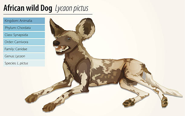 Wild Dog clipart #9, Download drawings