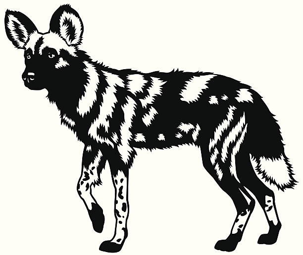 African Wild Dog clipart #2, Download drawings