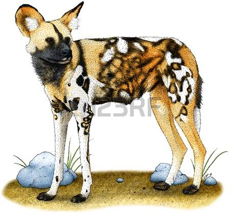 African Wild Dog clipart #6, Download drawings