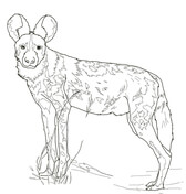 African Wild Dog coloring #1, Download drawings