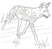 African Wild Dog coloring #2, Download drawings