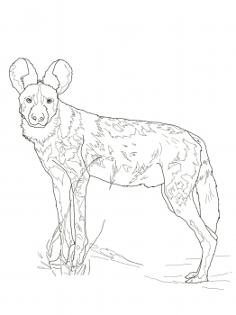 African Wild Dog coloring #3, Download drawings