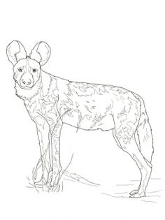 African Wild Dog coloring #4, Download drawings