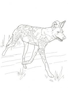 African Wild Dog coloring #5, Download drawings