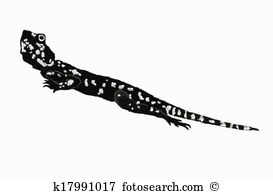 Agama clipart #6, Download drawings