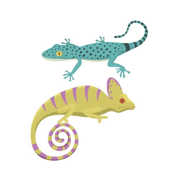 Agama clipart #4, Download drawings