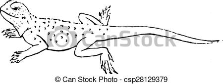 Agama clipart #13, Download drawings