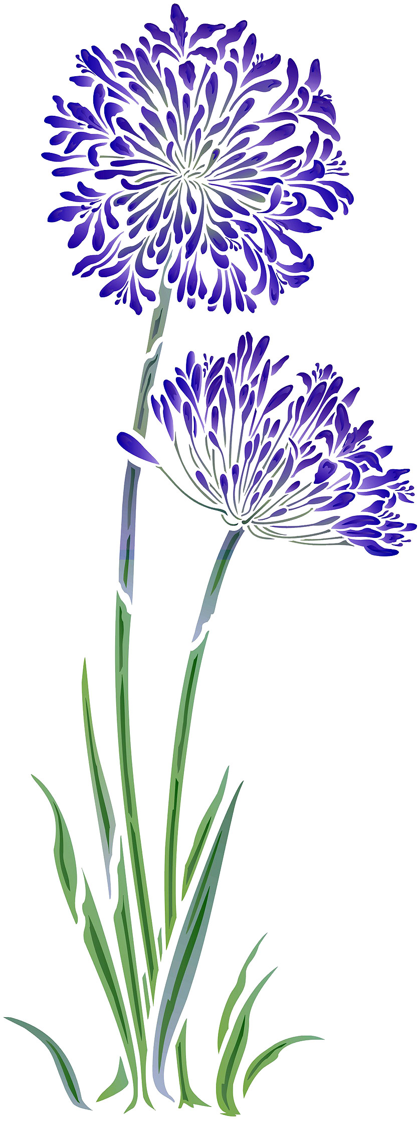 Agapanthus clipart #3, Download drawings
