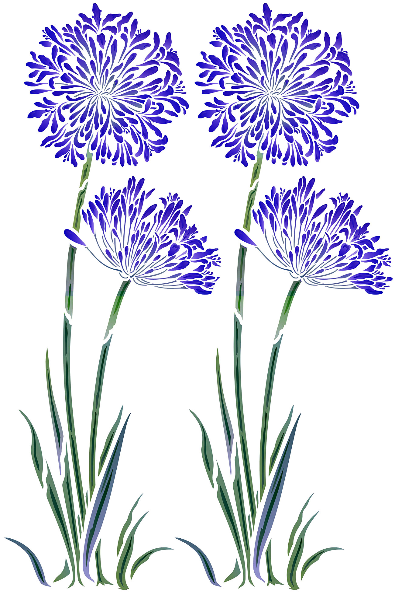 Agapanthus clipart #2, Download drawings