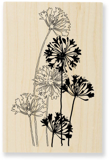 Agapanthus clipart #5, Download drawings