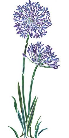 Agapanthus clipart #18, Download drawings